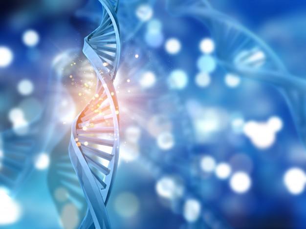 Une méta-analyse publiée dans The British Medical Journal démontre que si la prise de poids peut être est causée par le manque d'activité physique et une alimentation peu équilibrée, la génétique a aussi son mot à dire.