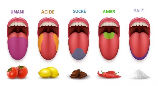 A la lumière de recherches récentes, l'umami rendrait non seulement la nourriture plus appétissante, mais augmenterait également le sentiment de plénitude. Ce qui réduirait le désir de trop manger.
