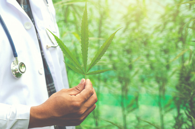 Des chercheurs californiens travaillent sur des molécules similaires au cannabis fabriquées naturellement par l'organisme. Ils espèrent que la réduction de ces endocannabinoïdes pourrait entraîner une meilleure régulation du comportement alimentaire.