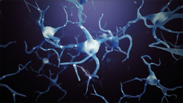 Des études chez la souris ont déjà montré qu'une hormone qui répond au nom de lipocaline-2 pondère, voire supprime l'appétit. Elle réduit également le poids corporel et améliore le métabolisme du sucre chez les animaux. A-t-elle les mêmes effets chez l'homme ou chez d'autres primates ? Si tel était le cas, la LCN2 pourrait être un traitement potentiel de l'obésité. C'est ce que pensent des scientifiques en poste à Munich à l'origine de cette découverte.