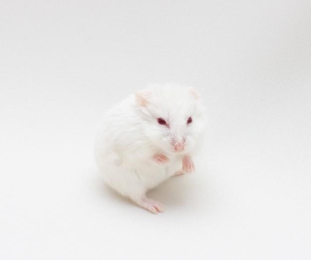 Comment prévenir les troubles métaboliques liés au vieillissement et à l'obésité, tel que le diabète de type 2 ? De récents travaux français ont permis d'identifier une nouvelle piste prometteuse : les astrocytes, c'est-à-dire la signalisation Sonic Hedgehog présente dans certaines cellules du cerveau. Cette étude menée chez la souris vient d'être publiée dans la revue Molecular Metabolism.