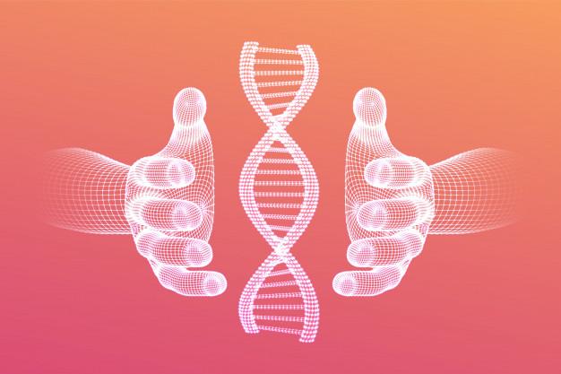 Via une « chaperone pharmacologique », les chercheurs ont restauré la fonction du récepteur de la mélanocortine de type 4 et réduit de manière importante la prise alimentaire des souris. Si les essais précliniques in vivo sont très encourageants, une application pharmaceutique pour l'homme est encore lointaine.
